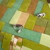 LANDCARPET EUROPE by Florian Pucher